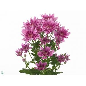 Фантазия цветы официальный сайт москва